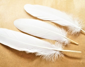 Set of 10 natural white goose feathers, 15-20 cm