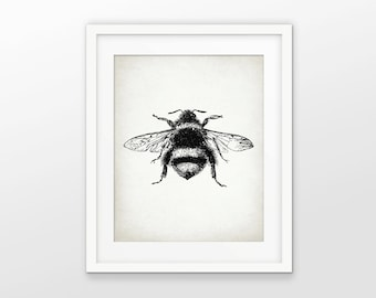 Bumble Bee Print - Bee Illustration - Bee Art - Bees - Entomology - Digital Art - Printable Art - Single Print #1601 - INSTANT DOWNLOAD