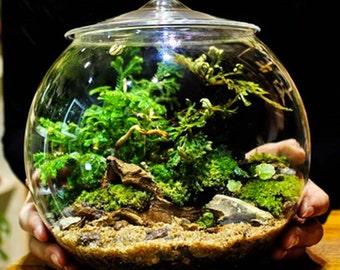 Glas Terrarium Behälter Glocke Gläser mit Deckel (groß)