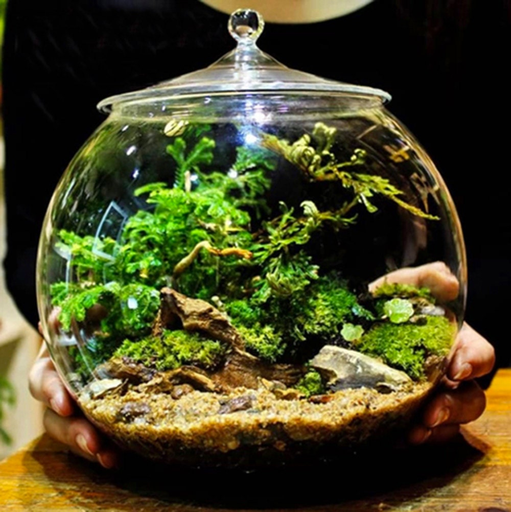 Glass Terrarium Container Bell Jars With Cover Large # Terrarium Dangle