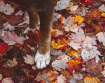 Fall Feet
