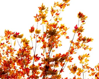 Autumn leaves, fall decorating, minimalist, shades of red, foliage, honey gold, white - Rustle 8x12