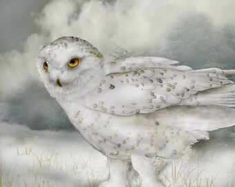 Snowy Owl 13 - 9x12 signed fine art print Bird lover gift Nature