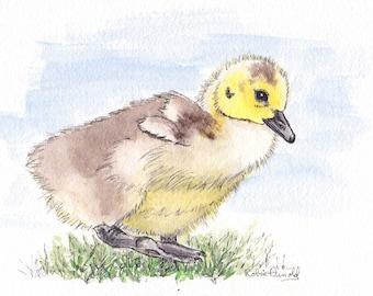 Baby Canada Goose  5x7  Pen and Ink and Watercolor, animal,birds,bird lover, geese, wildlife,nature,gosling,baby bird, nursery art,original