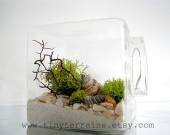Mothers Day Gift Beach Terrarium Kit, Modern Beach Glass Cube Moss Terrarium, White, Natural or Black Sand, Card, Fast Shipping, Beach Decor
