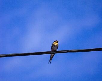 Bird Photography, Nursery Decor, Digital Wall Art