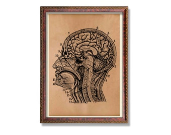 Vintage brain anatomy poster Head print Anatomical art