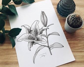 Lily Floral Print A/4 | Floral Illustration | Botanical Art | Wall Art
