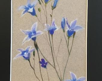 Blue Bell flowers (Campanula)