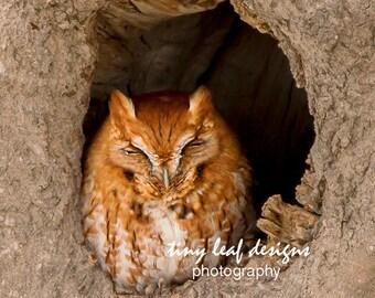 Screech Owl 5 x 7 Original Photography matted to 8x10