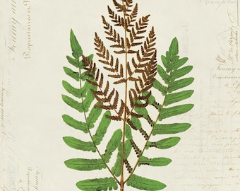 Vintage Fern on French Ephemera Print 8x10 P158