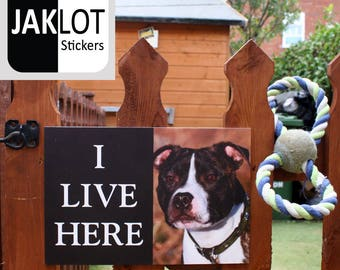 BULL TERRIER - I Live Here, Dog Warning Outdoor / Indoor Gate Fence Wall Sign