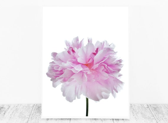 Pastel Print Based on A Photograph of A Peony