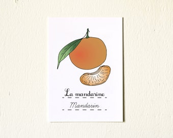 French Kitchen Art Mandarin 5x7 Print - Winter Fruits Series Citrus Botanical Chart Nature Food Home decor orange