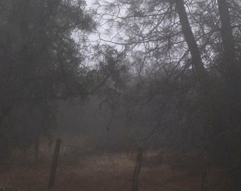 Fog and trees, Pinnacles National Park