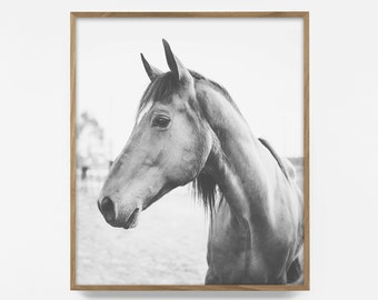 horse print, black and white horse photo, printable horse print, nordic horse art, equestrian print, printable art, horse decor, wild horse