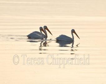 Pelican Art Photo Canvas, White Pelicans Photo, Bird Photography Canvas, Salton Sea Print, Sunset Photo Canvas, Soft Reflection Wall Canvas