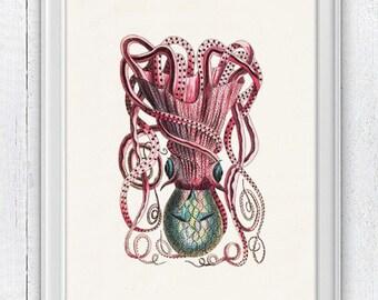 Vintage octopus n 25 - sea life print- Marine  sea life illustration A4 print- vintage natural history SAS174