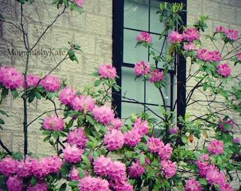 Pink Flowers & a Window