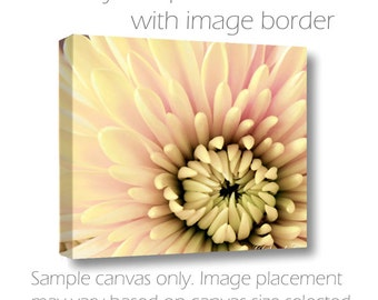 Large Wall Canvas-20x30-Floral Photography-Chrysanthemum-Cottage Wall Art-Pale Yellow-Pink-Green-Macro Photography-Living Room Wall Art