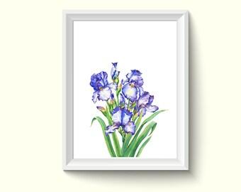 Iris Watercolour Painting Drawing Art Print N389