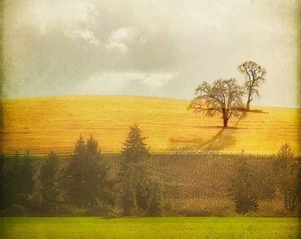Gold Hill Lone Oak Tree Photograph, green brown beige wall art, vintage inspired home decor