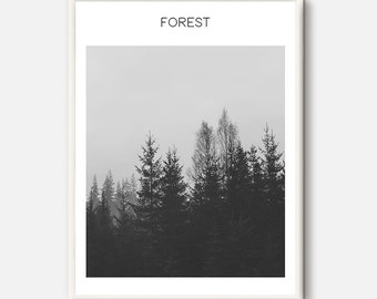Forest Print, Fir Trees, Photography Print, Forest Photography, Nature Prints, Nature Art, Nature Photography, Tree Print, Forest Prints