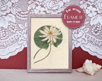 "Vintage illustration of Waterlily - framed fine art print, flower art, home decor 8""x10"" ; 11""x14"", FREE SHIPPING - 130"
