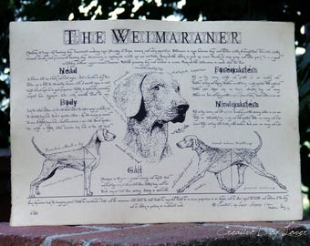 Antique styled dog standard - Weimaraner