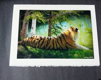 Card, greeting/greeting card made zoo, photo card, Saint-felicien, Tiger, love, animals, baby tiger. Sun