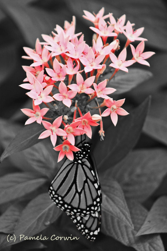Butterfly photo monarch butterfly photo print 9x12