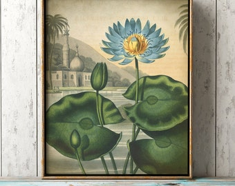 Botanical print, blue egyptian water lily poster, botanical wall decor, blue flower print, exotic flowers, botany decor, exotic landscape
