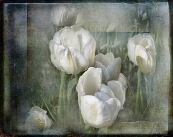 Michigan Print, White Tulips with Texture, White Tulips from Holland Michigan, Spring Tulip Print, White Flower Photography, Tulip Art