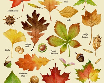 Autumn Leaves Print, Leaf Varieties, Types of Leaves, Seeds, Fall Colors, Harvest, Leaf Chart, Thanksgiving, Halloween, October, Hostess