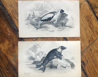 c. 1833 ANTIQUE SEAL PRINTS - original antique sea life prints- Jardine seal prints - marine mammals - set of 2 hand colored engravings