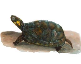 Bog Turtle Fine Art Print from an original watercolor painting by artist Joy Neasley