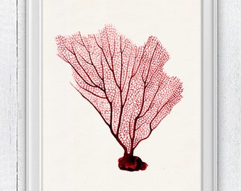Red Sea fan coral no.08 - Ocean life print -  sea life print-Marine  sea life illustration A4 print SWC085