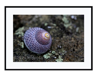 Large Coastal Print, Sea Shell Art, Nature Photography for Rooms, Purple Wall Decor, Beach Lover's Gift