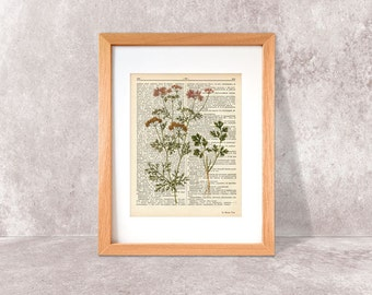 Cilantro herb dictionary print-Kitchen wall art-Cilantro on book page-cilantro print-herbs and spices prints-home decor-NATURA PICTA-DP039