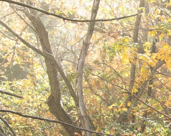 Fogy Fall Forest