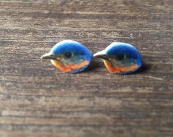 Bluebird earrings blue bird jewelry bird watcher wildlife animal birds