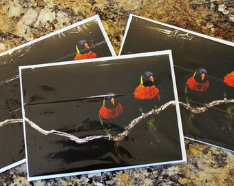 Two Parrots - Blank Greeting Card for any Occasion
