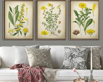 Botanical print set of 3, yellow flower print set, botanical poster, botanical wall decor
