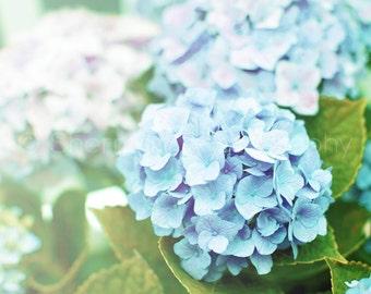 Hydrangea Photography, Blue Hydrangea Flower, garden photography, nature photography - 8x10 8x8 10x10 11x14 12x12 20x20 16x20 - Photography