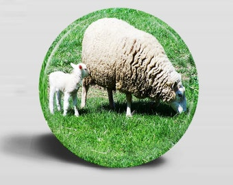 Button - SHEEP PHOTO Magnet - Ewe and Lamb Grazing- 2.25 Inch Round - OOAK Original