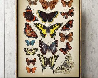 Butterfly poster, Butterfly print, butterflies wall decor, scientific butterflies chart, vintage butterfly