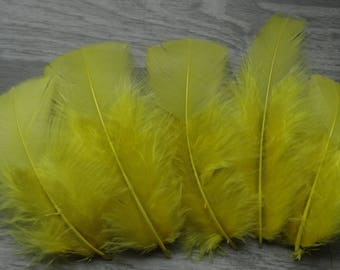 Set of 20 yellow Canary colored Turkey feathers
