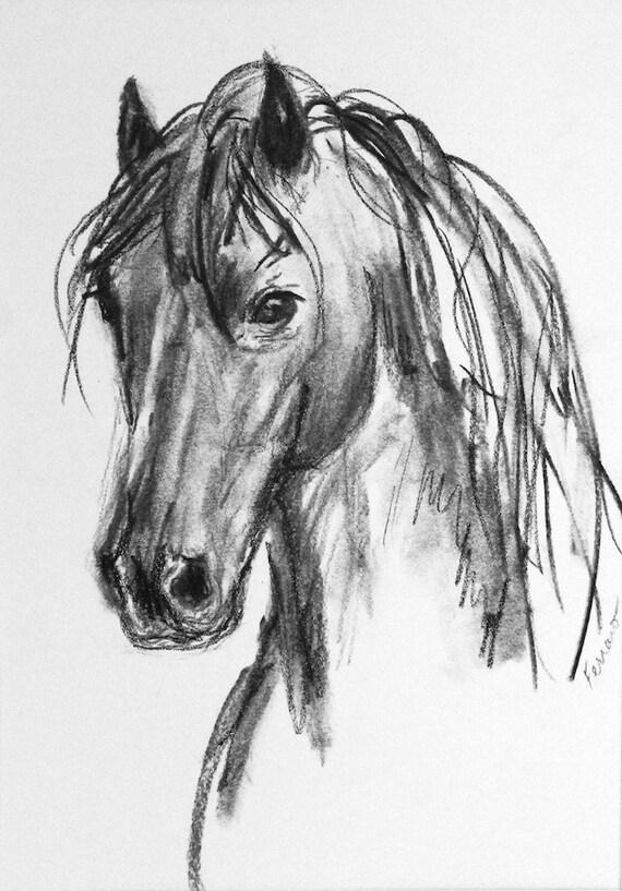 HD Animals Wallpapers: Horse Head Drawings  |Horse Art Drawings