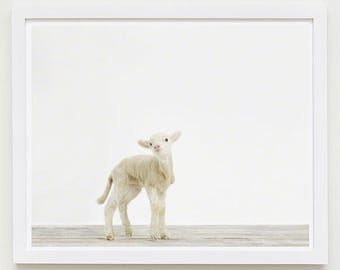 Baby Animal Nursery Art Print. Lamb No. 1. Safari Animal Wall Art. Animal Nursery Decor. Baby Animal Photo.