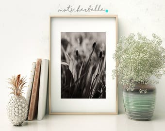Plantain - Fine art print, photography, nature, flower, abstract, spring, decoration, wall, hand made, high quality, art, photo